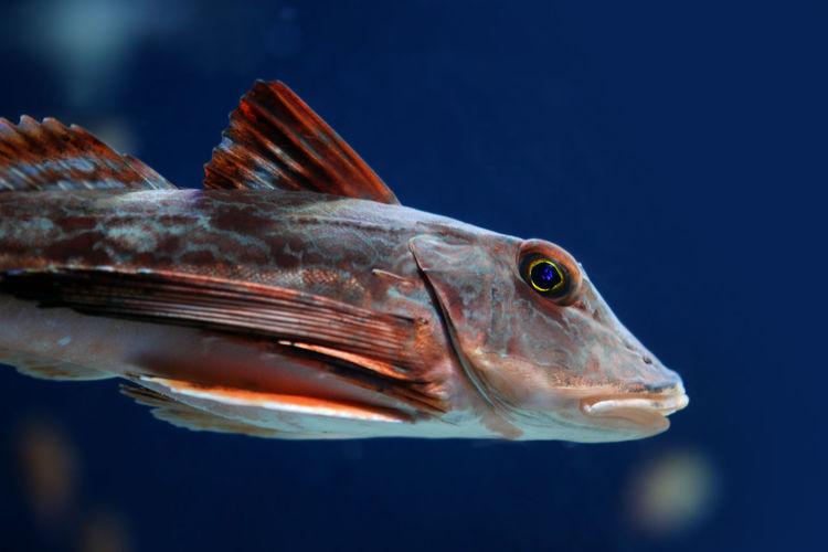 Fish Japan