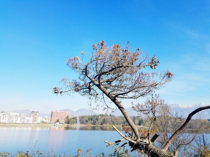 Sunny Day 🌞 Sky Artificial Lake Of Tirana Trees No People Outdoors Outdoors Beauty In Nature Water No People Mountain Tree