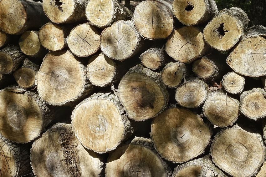 Bark Up Close Outdoors Stack Of Firewood Stack Of Wood Stack Stacked Firewood Wood Logs