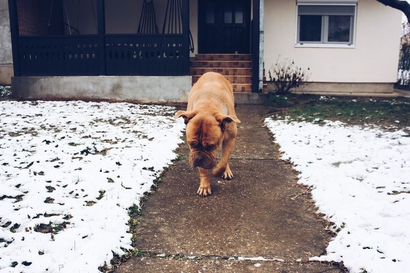 Pets One Animal Animal Themes Building Exterior Dog Domestic Animals Architecture Mammal Snow No People Cold Temperature Winter Day Built Structure Outdoors Street