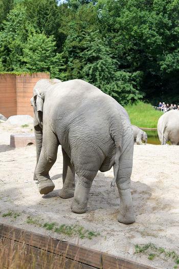 Elephant standing against trees