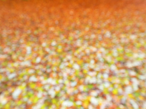 Abstract Art Autumn Backgrounds Berlin Close-up Day Defocused Fine Art Photography Flower Forest Fragility Freshness Full Frame Leaf Leafs Minimalism Multi Colored Nature No People Outdoors Textured  Tranquility Vibrant Color Wolskartin