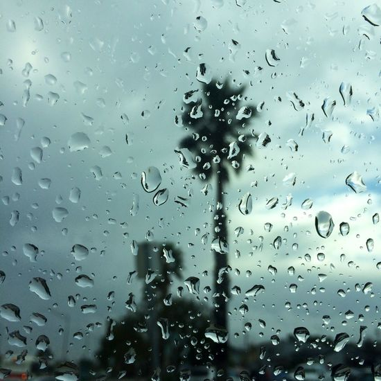 The past rainy weekend Rain Palm Tree Silhouette