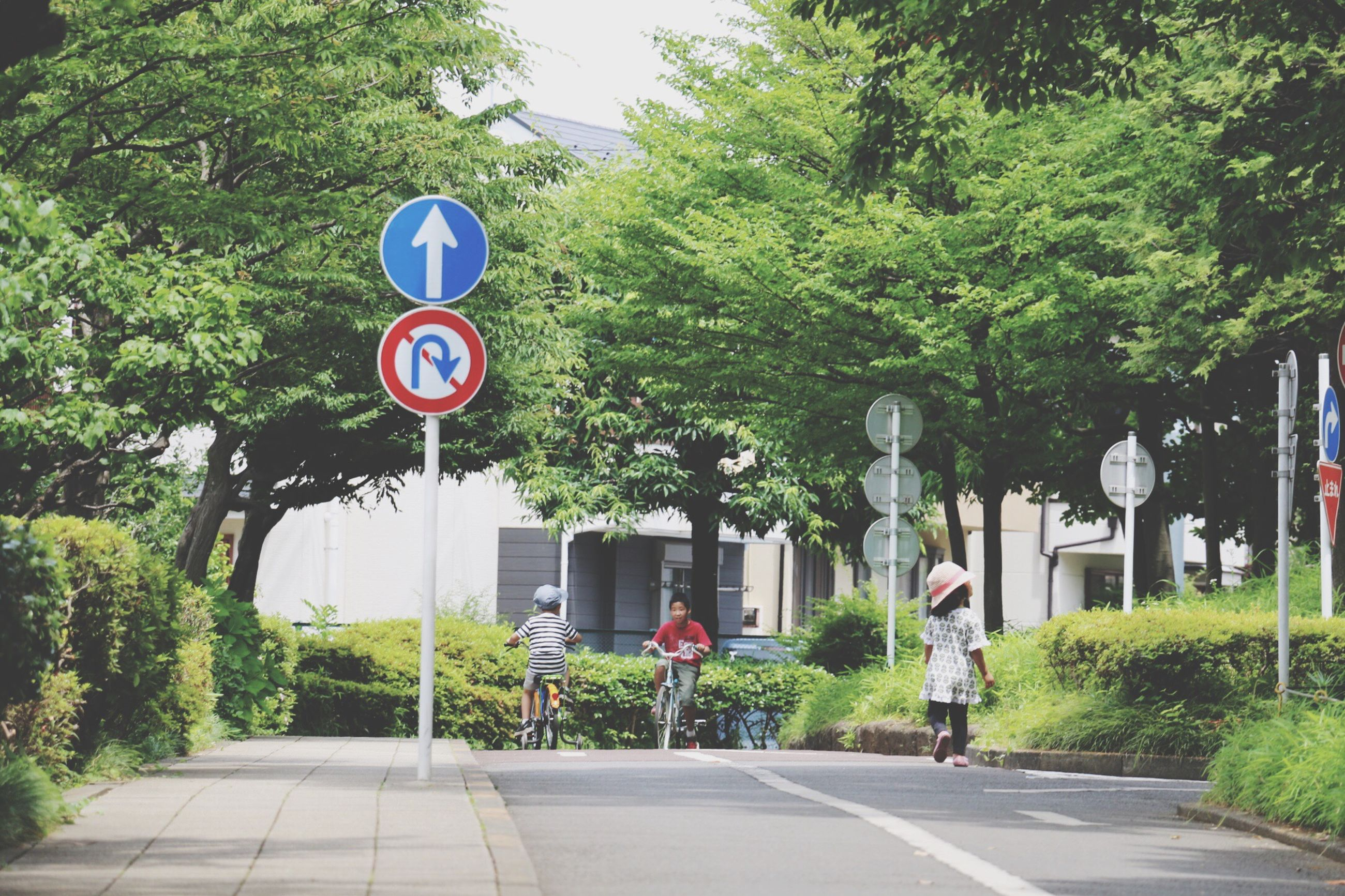 tree, text, communication, road sign, transportation, road, street, western script, information sign, sign, guidance, road marking, the way forward, arrow symbol, walking, city, directional sign, men, day