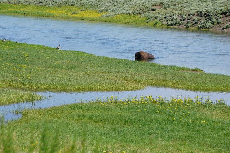 Bison River