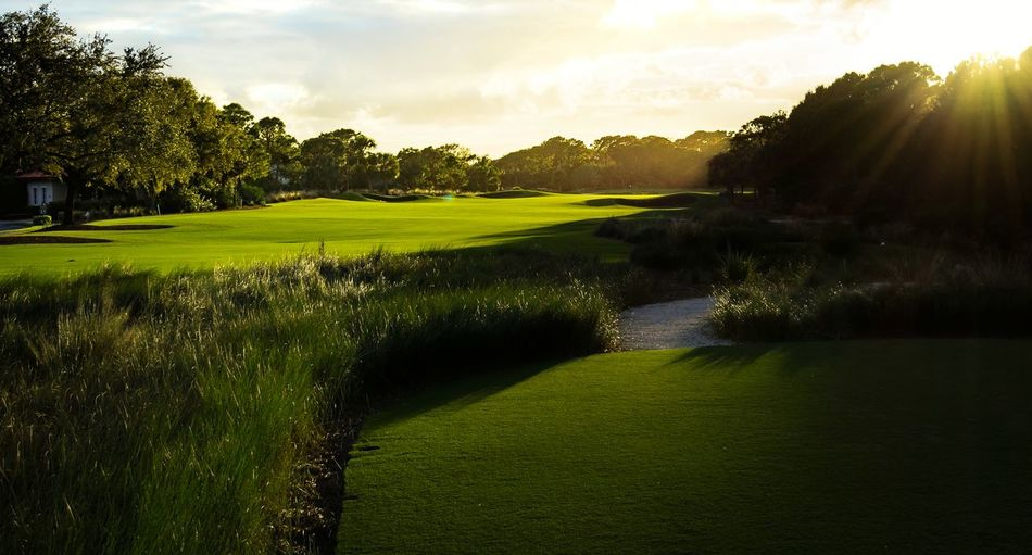 Beauty In Nature Sunlight Grass Tranquil Scene Scenics Landscape Golf Golf Course Majestic Cl3ar Vi3w Background Wallpaper Jupiter, FL Trump National Golfcourse Beautiful Fantastic View