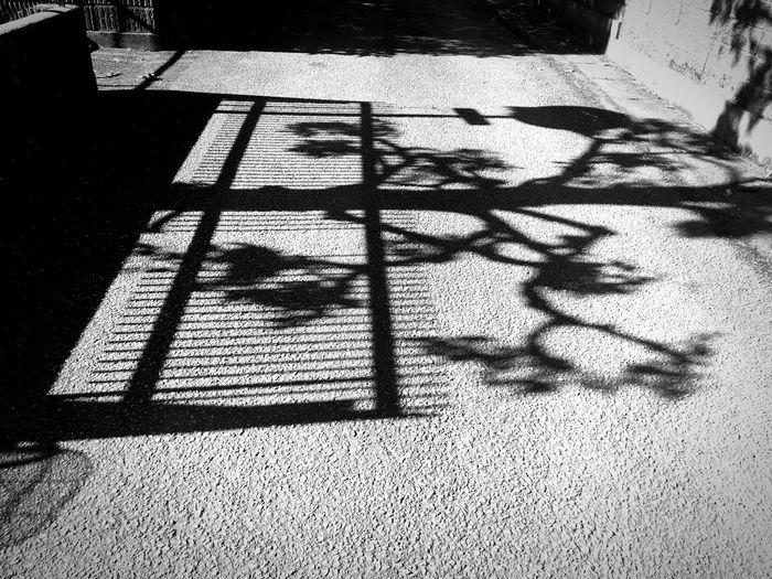 Shadow Sunny Day Blackandwhite Bnw Black And White Tree Blackandwhite Photography