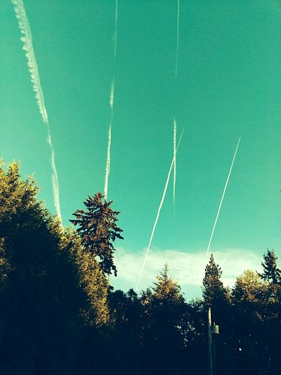 Sky Trails Tranquility Sky Low Angle View Treetop Tree Vapor Trail Vapor Trail Low Angle View Silhouette Sky Scenics Tranquil Scene Beauty In Nature Blue Tranquility Growth Nature Outdoors Day Outline High Section No People Non-urban Scene Bright Treetop First Eyeem Photo