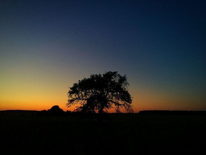Nature Sundown Tree Україна літо