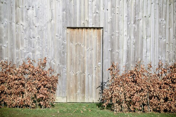 Brown Built Structure Day Fence Hedge Nature No People Outdoors Plank Space For Copy Timber Weathered Wood - Material Wood Grain Wood Paneling Wooden Door Wooden Fence Wooden Gate