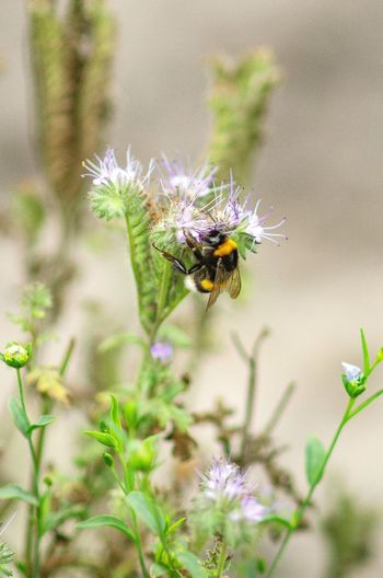 Insect Flower Close-up Plant Blooming Bumblebee Symbiotic Relationship Buzzing