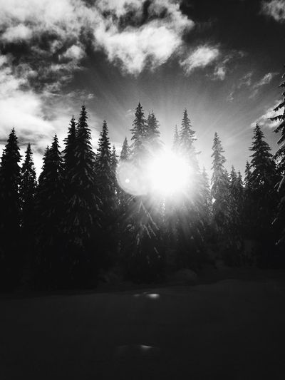 Tree Nature Growth Sunbeam Tranquility Sunlight Tranquil Scene Beauty In Nature No People Sky Sun Outdoors Landscape Scenics Winter Snow Blackandwhite