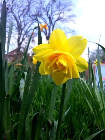 Daffodil No Filter Summer Is Coming Flower Nature Macro Spring Flowers Spring Flowers Beautiful