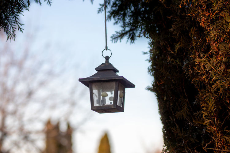 Close-up of electric lamp hanging by tree against sky