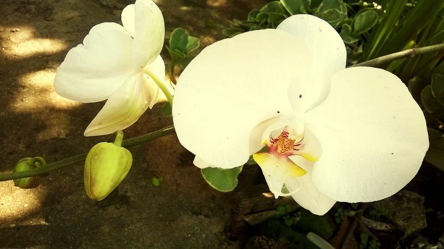 My Favorite  Flowers ♡♥♡ Orquídea❤