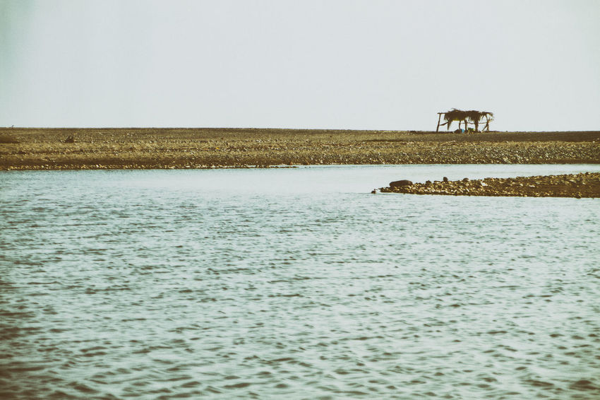 View of a small palapa in the delta of the Nexpa River. Animal Themes Beauty In Nature Clear Sky Day Domestic Animals Lake Landscape Livestock Mammal Nature Nex No People One Animal Outdoors Scenics Sky Tranquility Water Waterfront