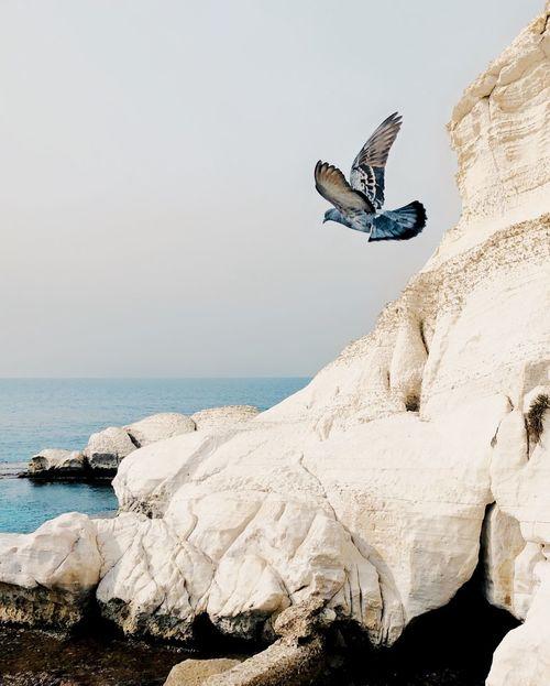 Blue Bird מייטבע מייים מייראשהנקרה מייאייפון10 IPhoneX ShotOnIphone Sea Animals In The Wild Bird One Animal Rock - Object Nature Spread Wings Animal Wildlife EyeEm Ready