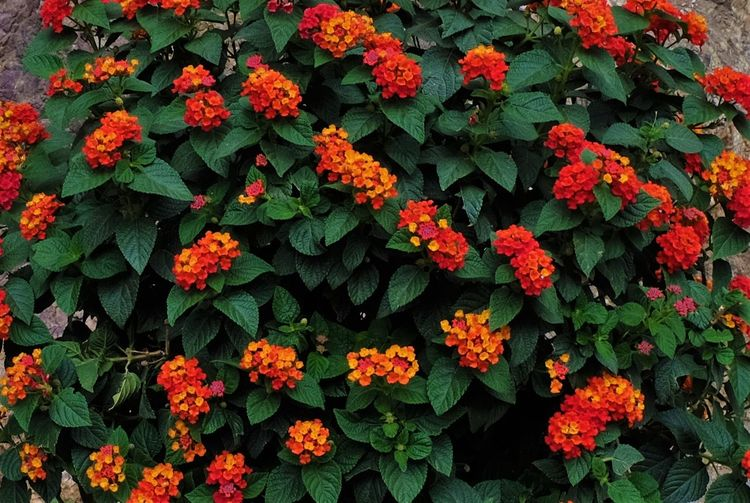 Orange flowers blooming outdoors