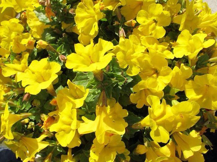 Flowers Blumen Taking Photos Bayern Franken Franconia Bavaria Retzstadt Canon PowerShot SX130IS