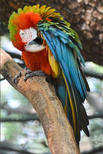 Macaw MacawParrot Greenwingedmacaw Scarletmacaw Colourfulparrot Amazonparrot
