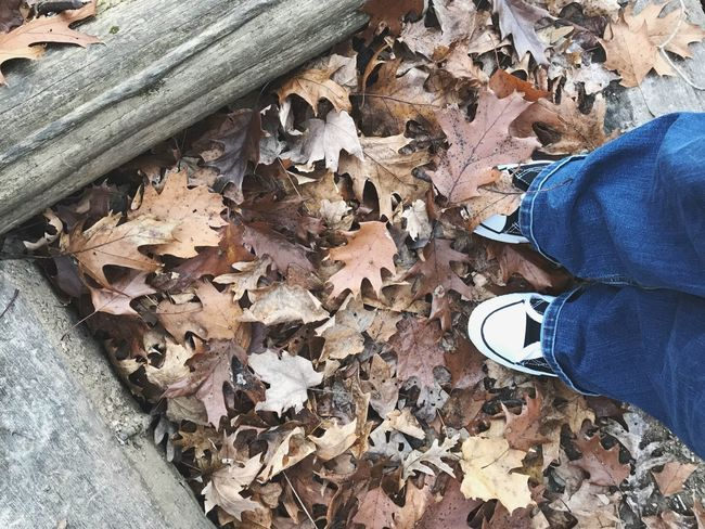 Leaf Autumn Shoe Personal Perspective One Person Human Leg Change Nature