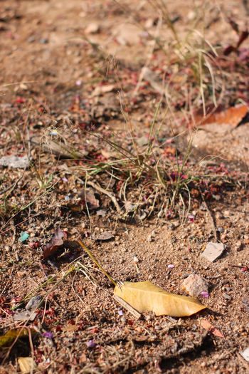 High angle view of dry leaves on ground