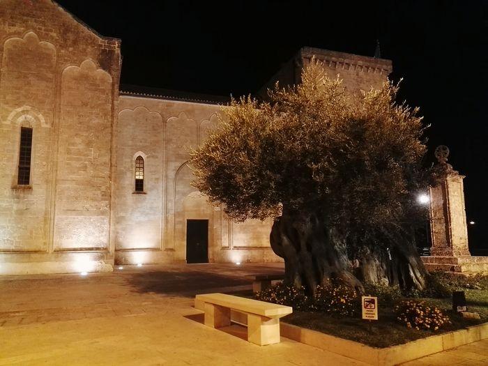 Secular Tree Olive Tree Secular Olive Tree Night Illuminated Tree Christmas Architecture No People Outdoors