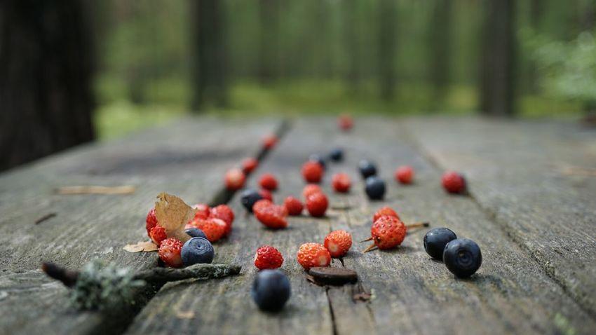 ягоды Черника земляника Лес Природа красота Forest Nature