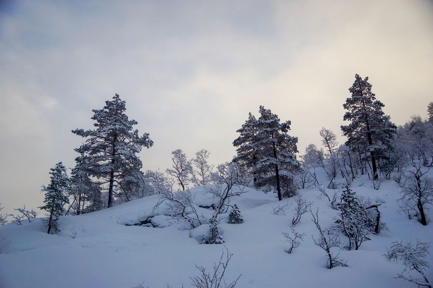 Snowy Landscape Remote Location Copy Space Norway Nature Winter Hiking Snowy Mountains Winter Wonderland Snowy Trees Winter Snow Cold Temperature Tree Plant Sky Cloud - Sky Nature Beauty In Nature Tranquility No People Coniferous Tree Pine Tree Scenics - Nature Day Environment Tranquil Scene Non-urban Scene Snowcapped Mountain Pinaceae