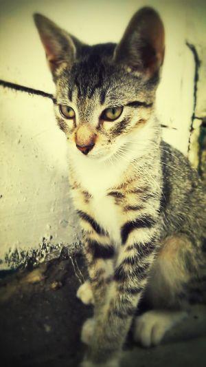 Cute Pets AnimaLs <3 Cat Animals