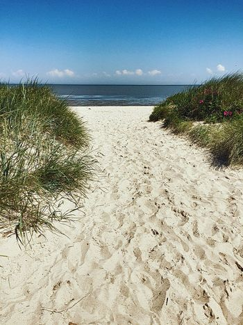 Strand Beach Dune Dunes Meer Nordsee Nordseeküste Schillig Grass Grassy Trawa Blue Sky Blue Morze Watt Horizon Over Water Sea Sand Water Tranquil Scene Scenics Tranquility Plant Beauty In Nature Vacations Shore Sky Sandy Growth Tourism Nature Grass Idyllic
