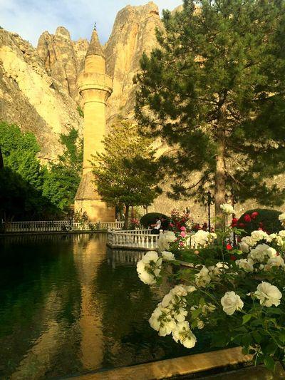 Fantastic Exhibition Adventure Photography Prying Trip Photo Trip Minare Minaret Havuzbasi Yeşil / Green ♧ Balikli Havuz Dua Darende Darende De Bir Gül Ağacı Beyaz Gül Güllü Malatya Yansima