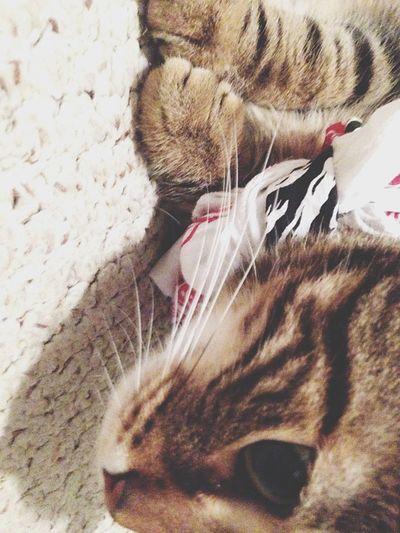 K I K I Insane Kitty Cats