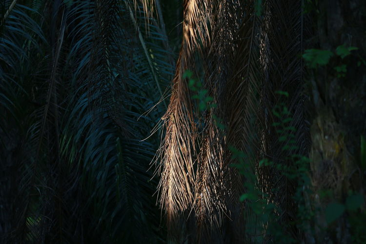 Tree Forest Land Plant Nature No People Growth Light And Shadow