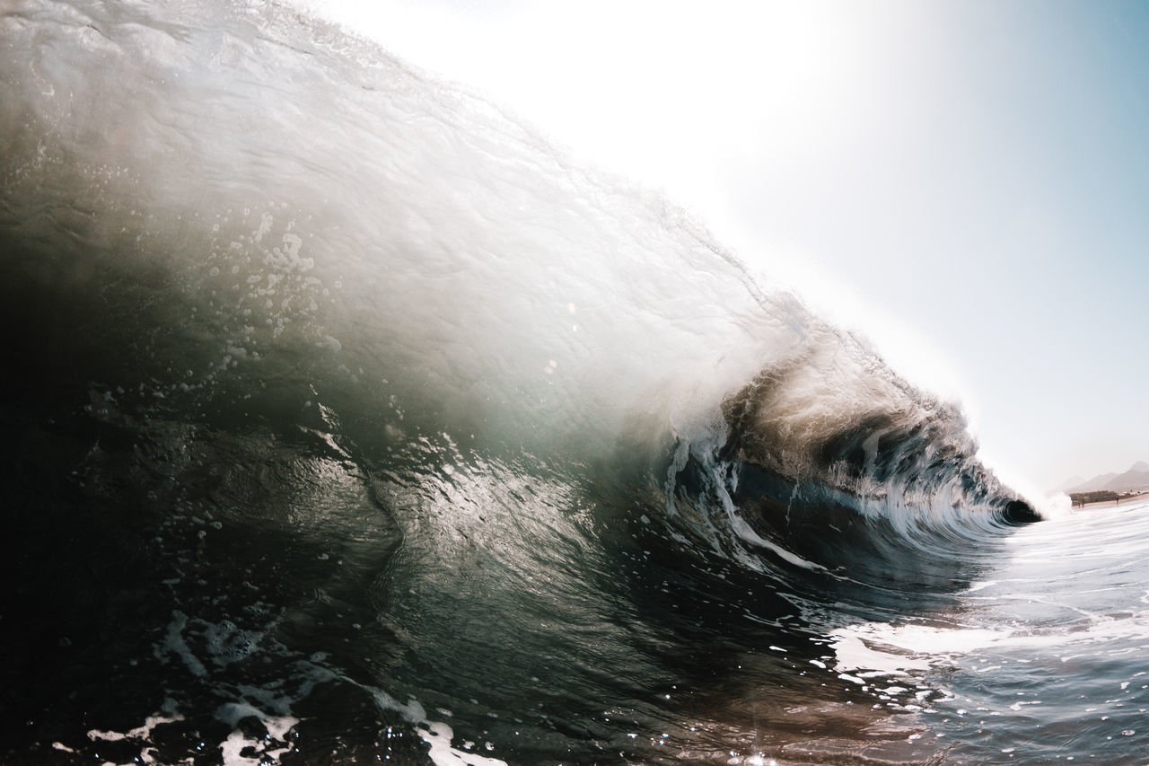 water, sea, underwater, nature, one animal