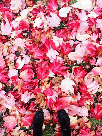 Leaves on pink flower