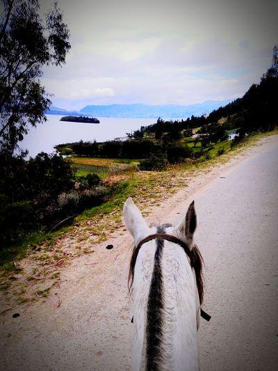 Horse Enjoying Life Cabalgar cabalgata Relaxing