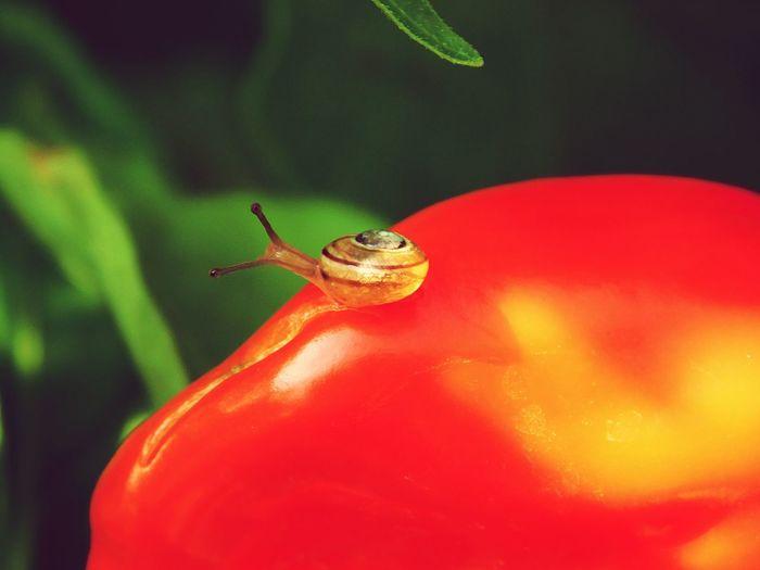 baby slug on