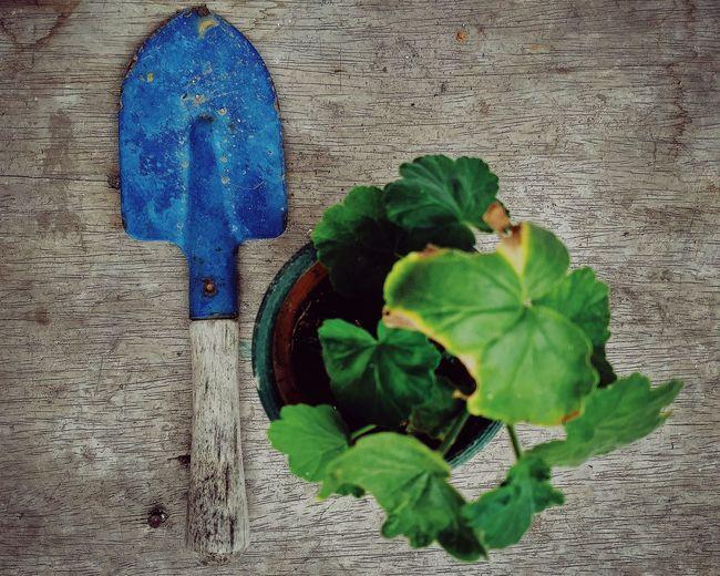 By the garden VSCO Limaperu Pelargonium Leaf Close-up Green Color Plant Blooming Dahlia Pollen 10 The Still Life Photographer - 2018 EyeEm Awards