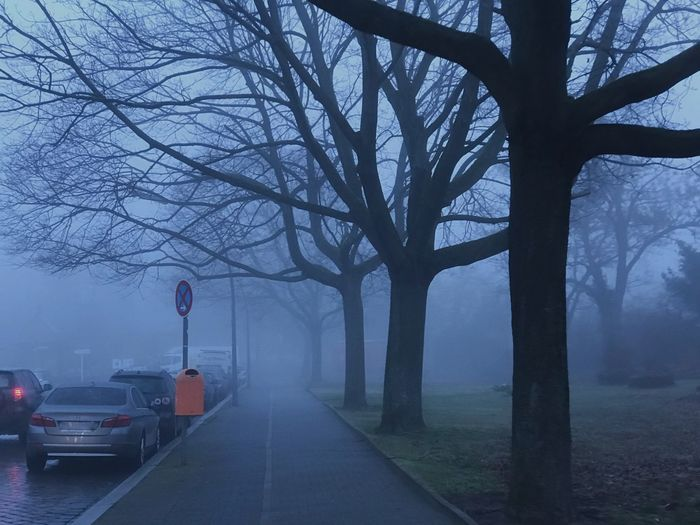 Road amidst bare trees during foggy weather