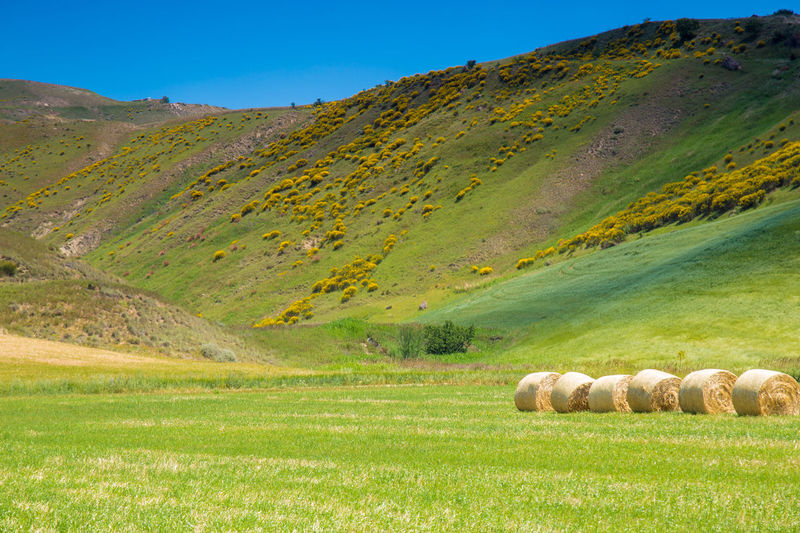 tipical springtime Basilicata landscape Agriculture Animal Themes Bale  Beauty In Nature Clear Sky Day Field Grass Hay Bale Landscape Mammal Mountain Nature No People Outdoors Rural Scene Scenics Sky Tranquil Scene Tranquility