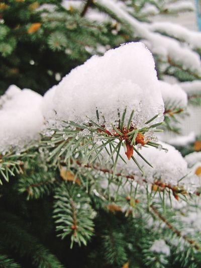winter Cristmas