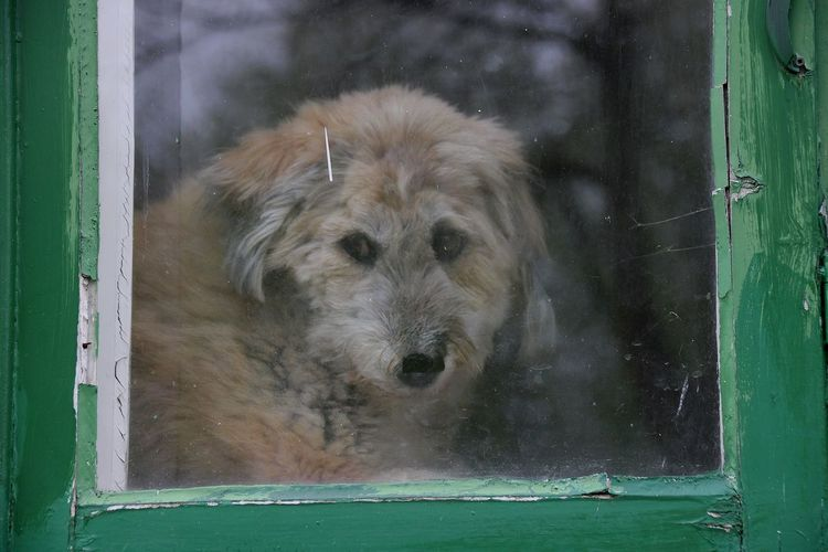 Close-up portrait of dog by window