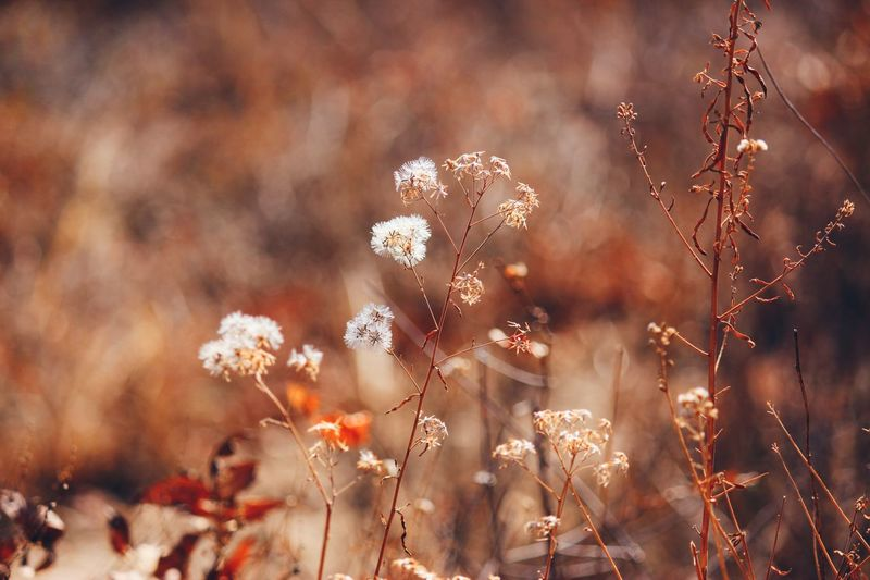 Back when it was cold. Nature Plant Bokeh EyeEm Nature Lover Close-up Beauty In Nature Autumn Eye4photography