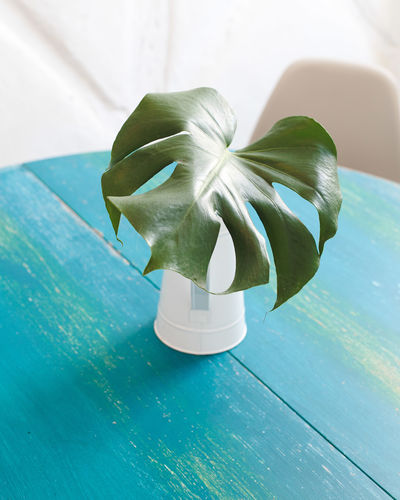 High Angle View Of Leaf In Vase On Table