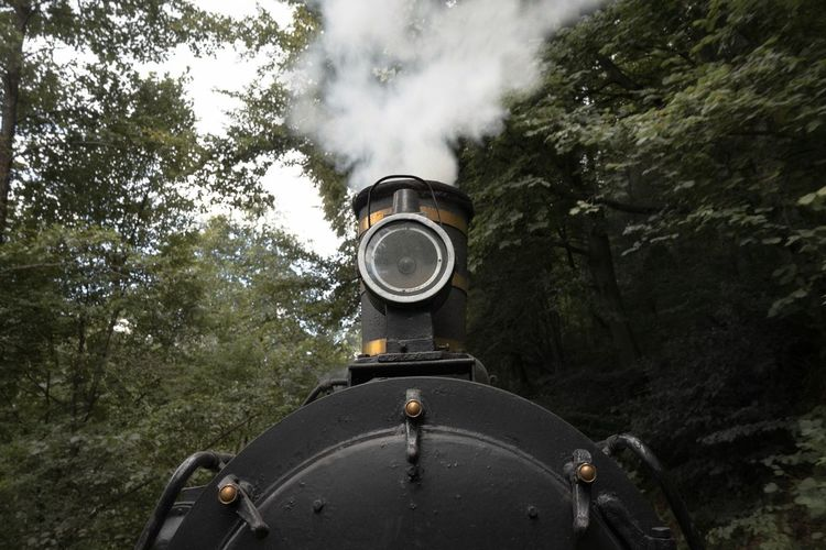 Steam train amidst trees in forest