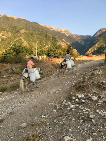 Albania Gjirokaster Beauty In Nature Clear Sky Day Domestic Animals Horse Landscape Livestock Mammal Men Mountain Mountain Range Nature One Person Outdoors People Scenics Sky Tree