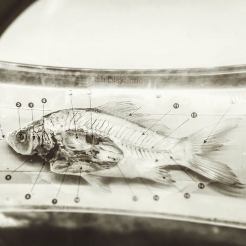 For science! Gruesome Fish are Wonderful