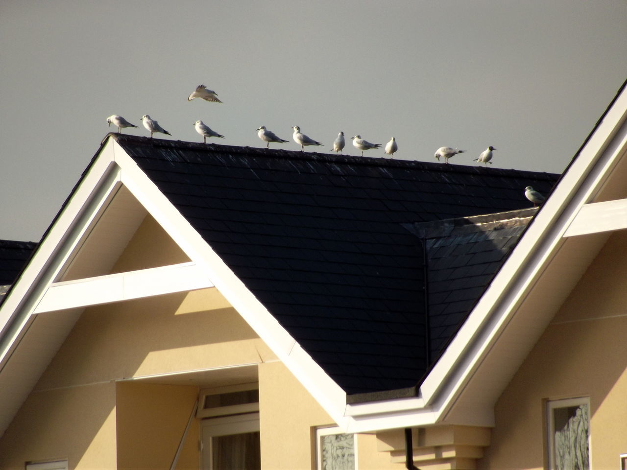 Seagulls Perching On House Against Sky