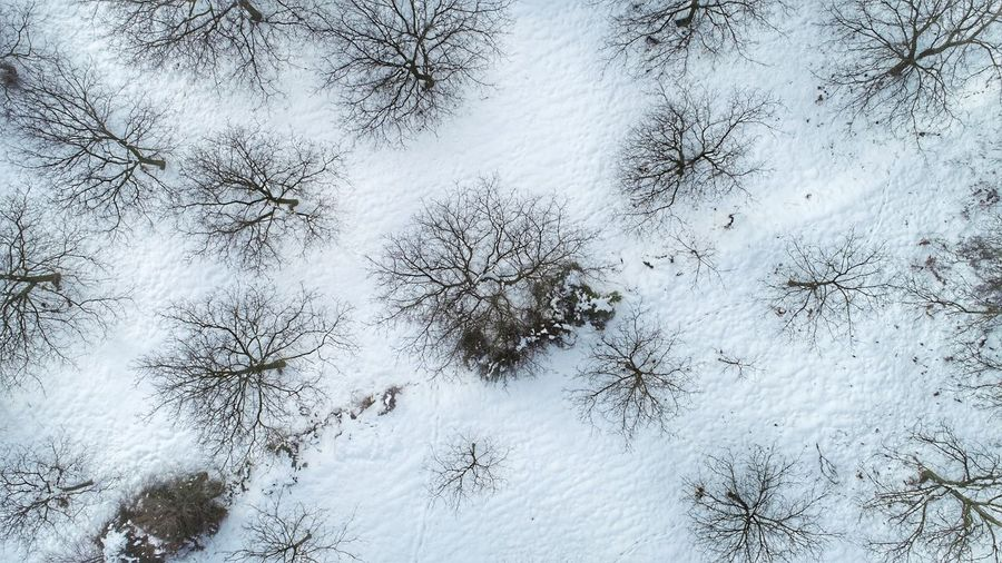 Full frame shot of trees on snow covered land